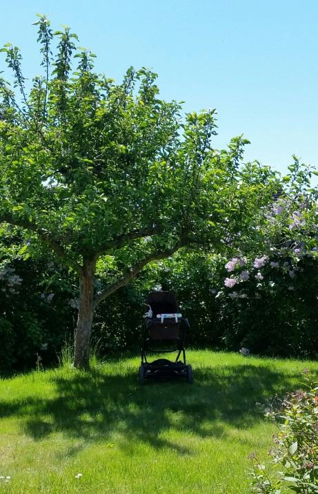 lolaloo under trädet
